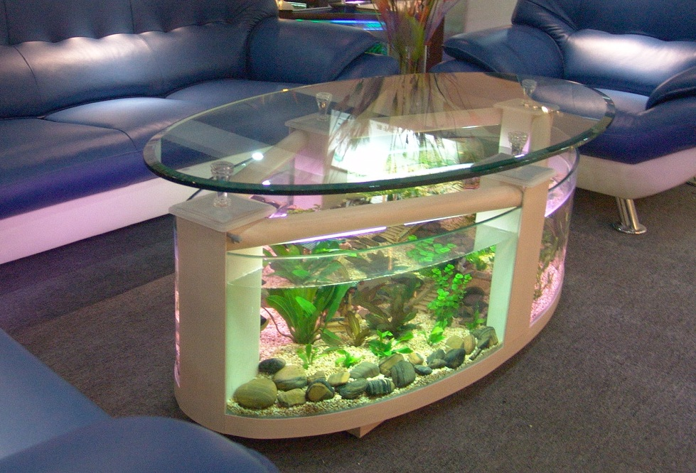 Charming Coffee Table Fish Tank