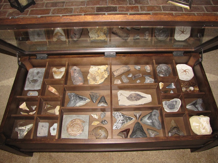 Fossils Glass Display Coffee Table