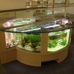 Shaped Coffee Table Fish Tank