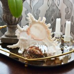 Shell as Coffee Table Accessory