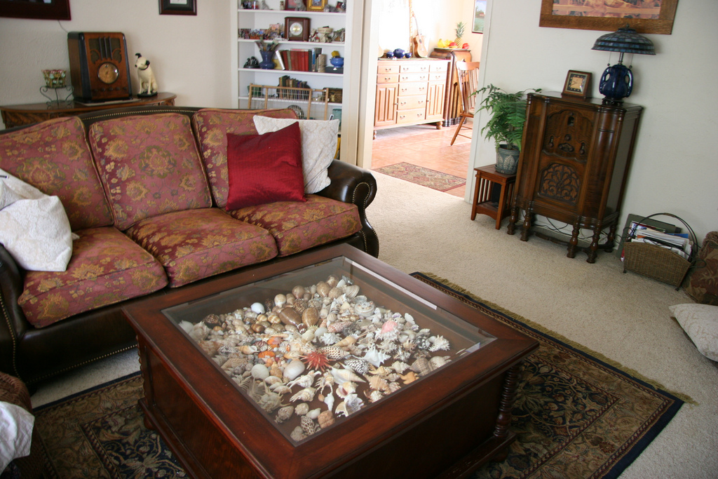 Shell Glass Display Coffee Table